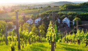 paysage de Tokaj