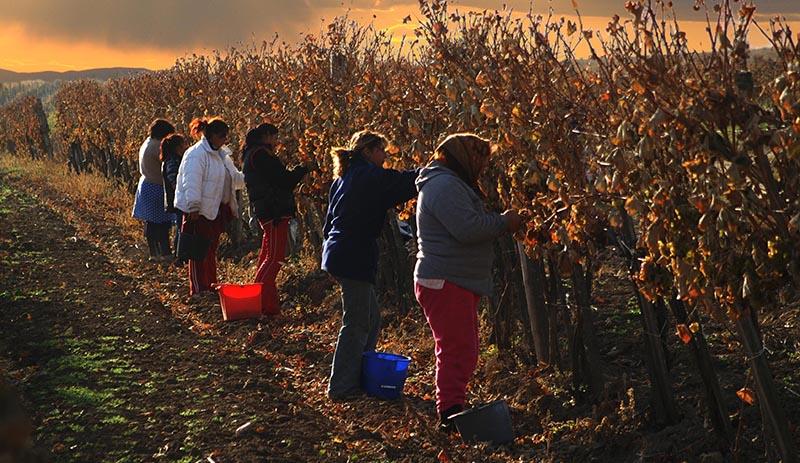 secrets de vignerons