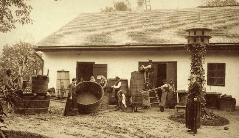 vendange dans les collines en 1892