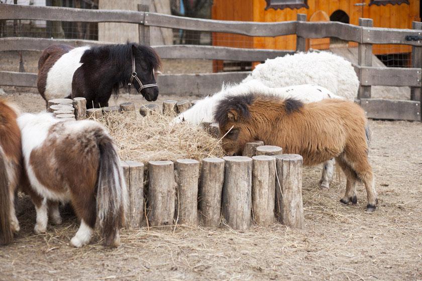 mini zoo pour enfants