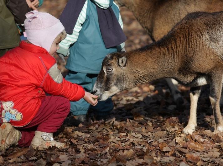 caresses des animaux